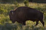 07-14-08 BS Big Bull 1453.jpg