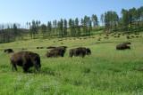 07-11-08 Custer 014.jpg