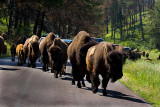 07-11-08 Custer  March 024.jpg