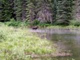 Scott & Christie on Logan Pass - July 4th 2008