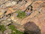P1010072 More flowers on rocks.JPG