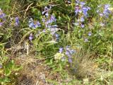 P1010073 Purple flowers.JPG
