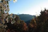 Morning Light - Annapurna