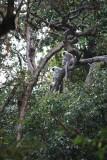 Monkey's - Annapurna