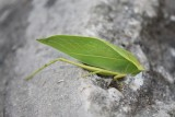 Insect - Pokhara