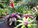 Bromeliad group