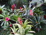 Bromeliad Group 2008 Feb