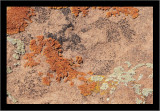 Living Soil in  the Desert #3