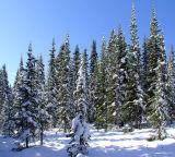 New snow....