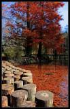 Autumn Kitsch