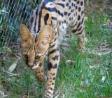 Memphis Zoo, July 2008