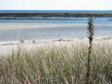 Beach Grass 3