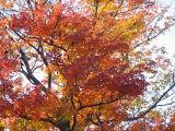 Fall Colors 8