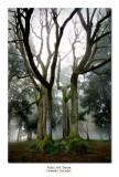 Trees, Mt. Tabor, Oregon