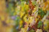 Leaf Through