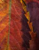autumn fissure