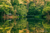 Sepilok- Lake at Rainforest Discovery Centre, Sandakan.