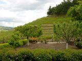 Vineyards at Pine Ridge Winery