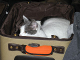 Someone wanted to come with us