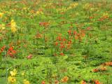 Caraballo Flowers