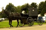 Holmesville OH Amish Buggy