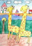 giraffe, Carey, age:6