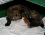 Kattungarna.jpg