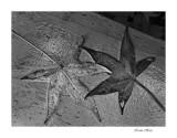 leaves 11 09_tn.jpg