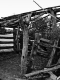 Milking Shed c.1880s