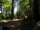A drive along Navarro ridge road