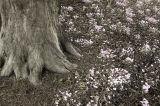 winter blooms :: forde abbey