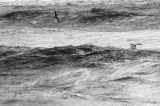waves :: west bay