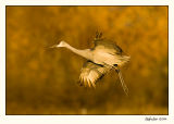 Birds - 2005
