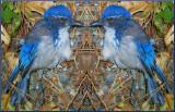 West Nile Blue Bird 2