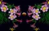 Night Lily Perfume