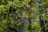 River Through the Trees - Cascade Color - Oregon
