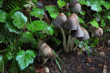 Mushrooms - Silver Falls State Park, Oregon