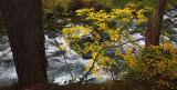 Through the Trees - Mckenzie River, Oregon