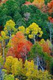 fall826.jpg