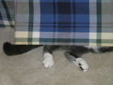When Cats Need Privacy