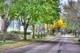 Shady Street