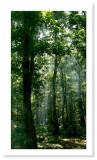 Gisoum Forest