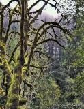 Moss Grows... an Oregon View