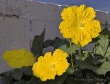 Lufa Flowers