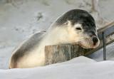 Lounging Sea Lion.jpg