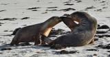 Seal Secrets.jpg