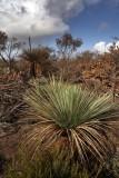 KI Bushland.jpg