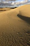 Little Sahara_7.jpg