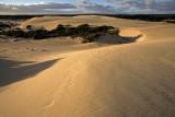 Little Sahara_11.jpg
