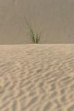 Little Sahara_17.jpg